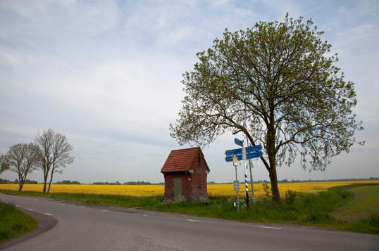 Koolzaadveld nabij Lutjewolde